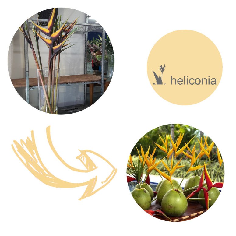 heliconia.png
